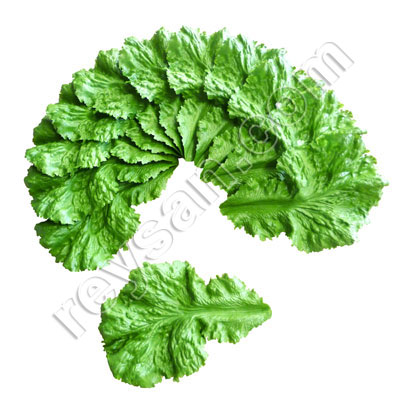 LETTUCE LEAVES PACK 12 PCS.